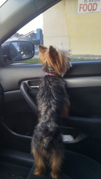 Lola Going Home
